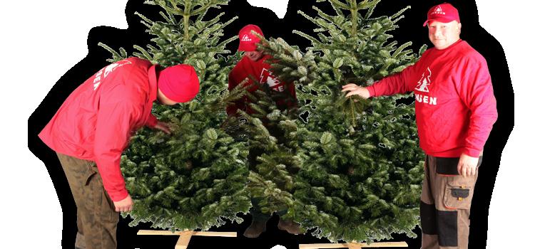 weihnachtsbaum aufstellen tannenbaum aufstellen. Black Bedroom Furniture Sets. Home Design Ideas